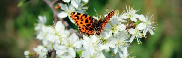 Przyroda Wiosną