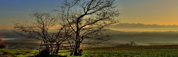 slider-drzewo